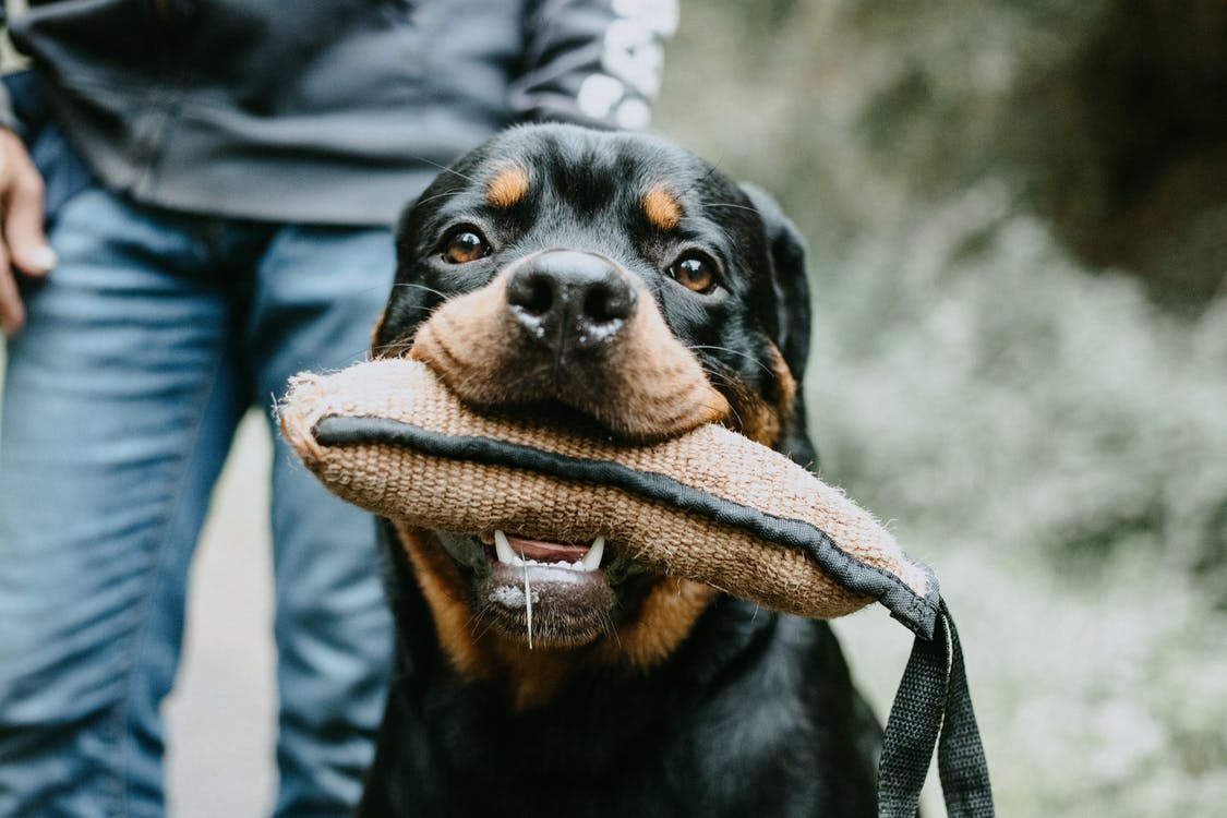 Shallow Focus Photo of Dog Beside Person