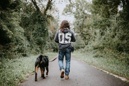 Darmowe zdjęcie z galerii z belgia, chodzić, dogwalk, dorosły