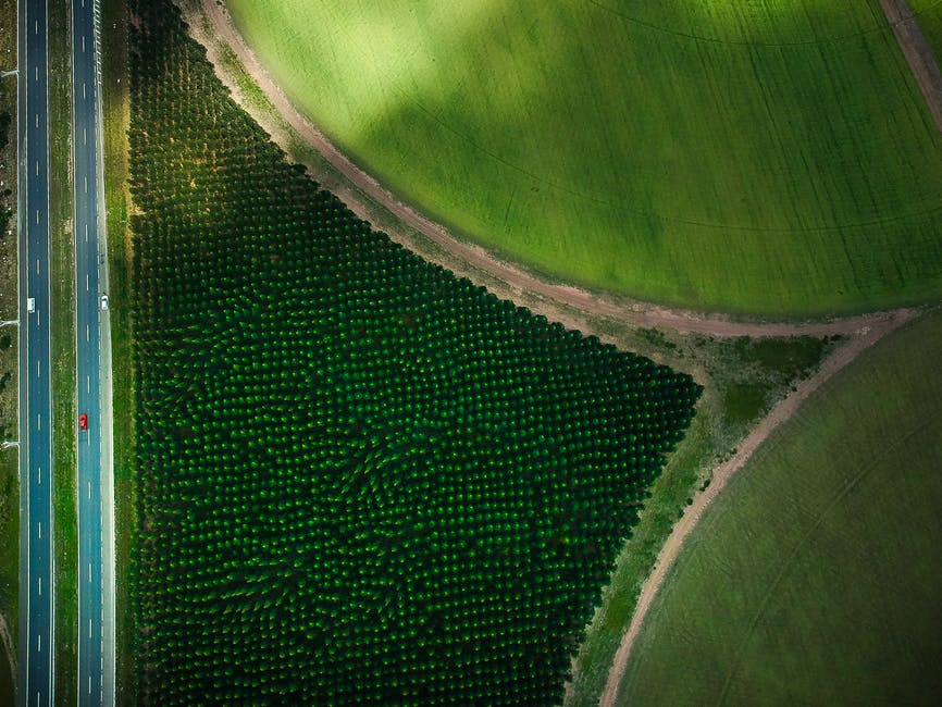 A drone shot of art works in a farm fields