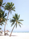 beach, summer, take