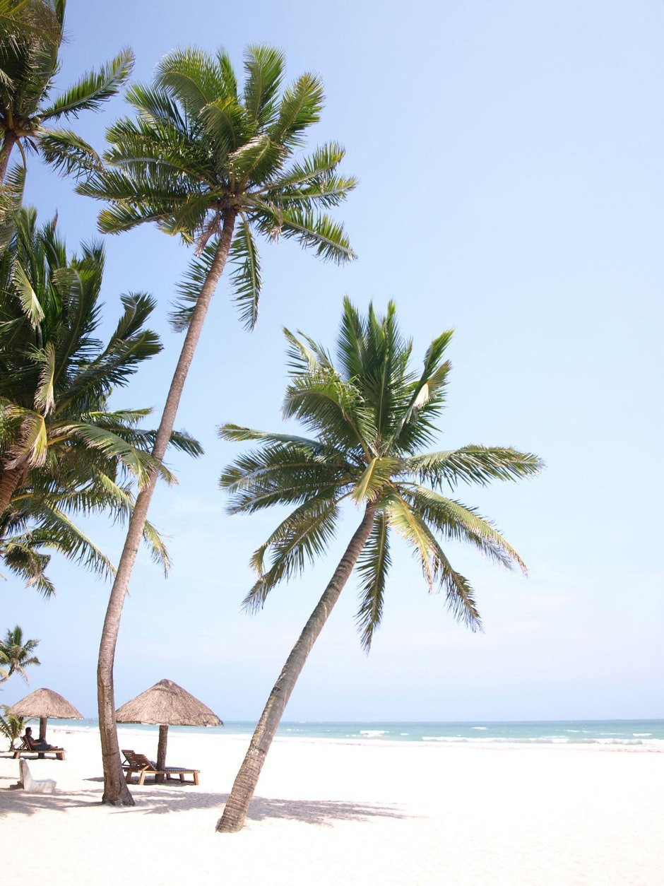 beach, holy days, palm tree