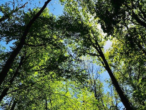 Gratis arkivbilde med anlegg, blå himmel, blader