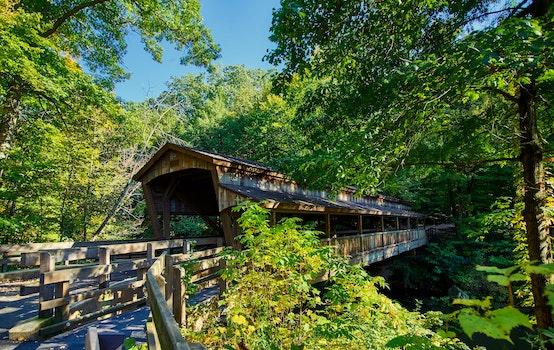 Free stock photo of wood, landscape, nature, landmark