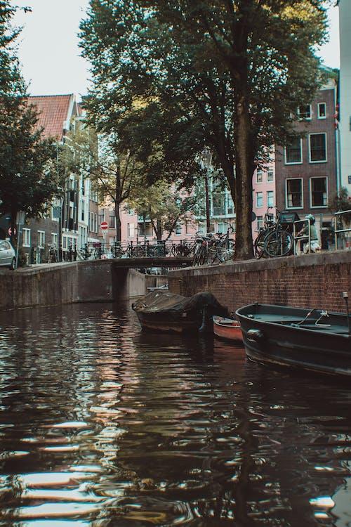 Immagine gratuita di acqua, alberi, amsterdam, architettura