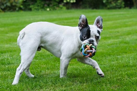 Free stock photo of animal, dog, grass, play