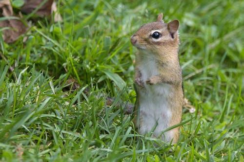 Foto stok gratis berjaga-jaga, binatang, lingkungan alami, postur tegak