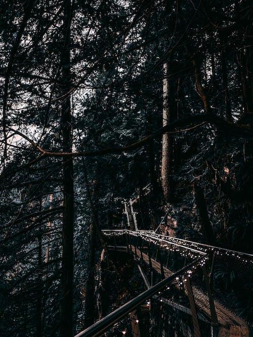 Imagine de stoc gratuită din arbori, ceață, codru, frig