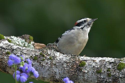 Foto stok gratis alam, bokeh, burung, burung hitam dan putih