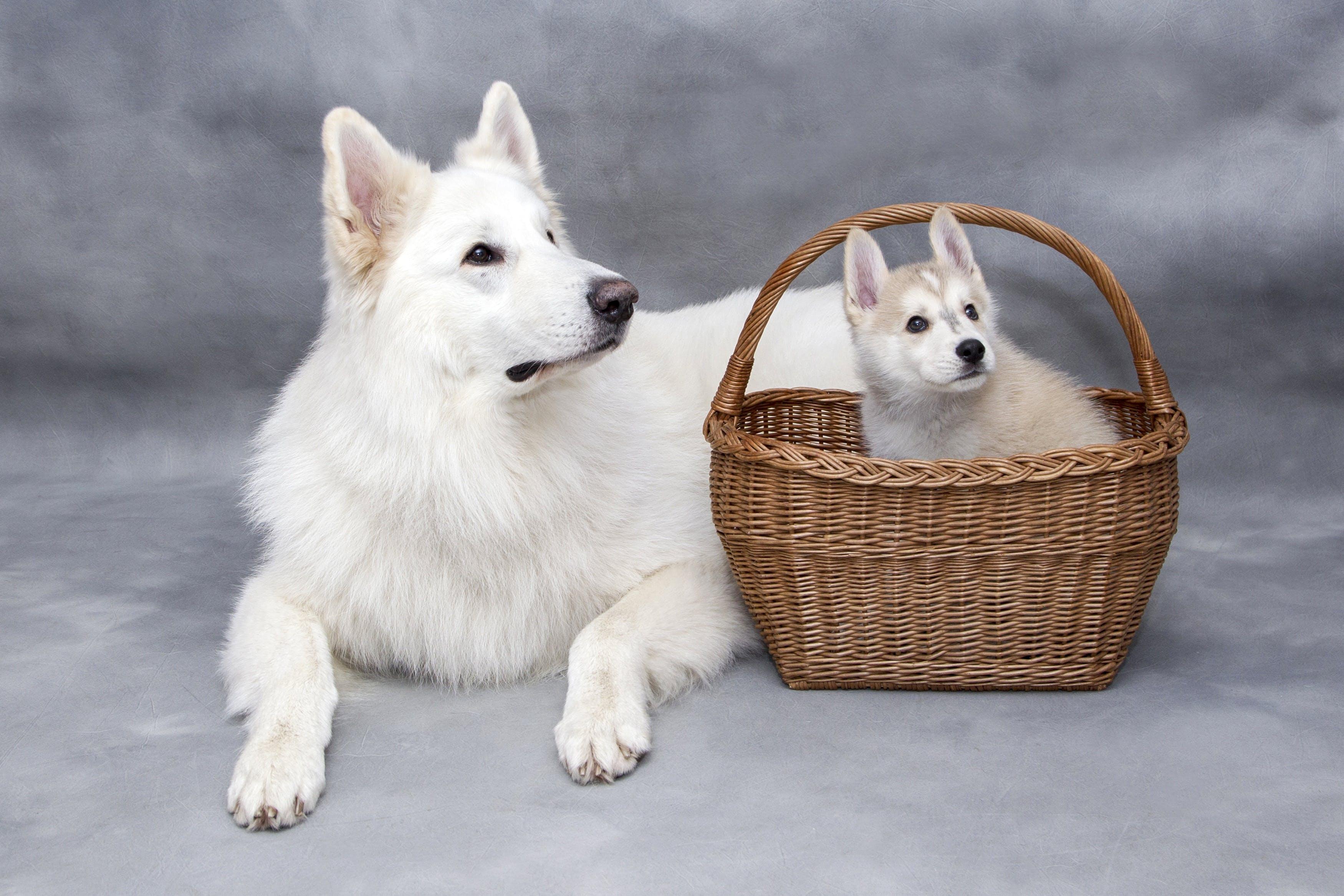 Free stock photo of dog, pet, cute, animals
