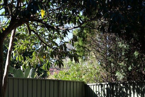 ağaçlar, arka bahçe, Avustralya, çit içeren Ücretsiz stok fotoğraf