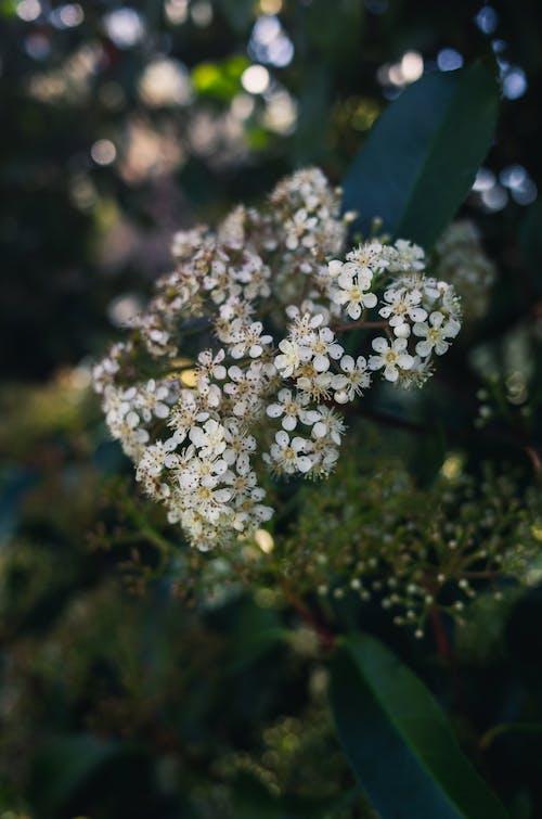 Darmowe zdjęcie z galerii z biały, bokeh, kwiatowy, kwiaty