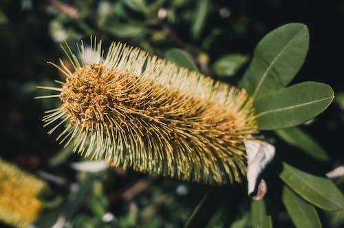 Darmowe zdjęcie z galerii z kwiat, liście, na zewnątrz, natura