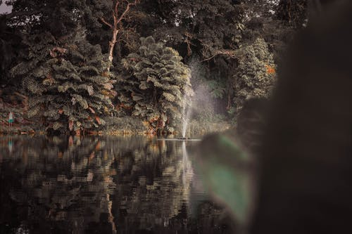 公園, 反射, 噴泉, 天性 的 免费素材照片