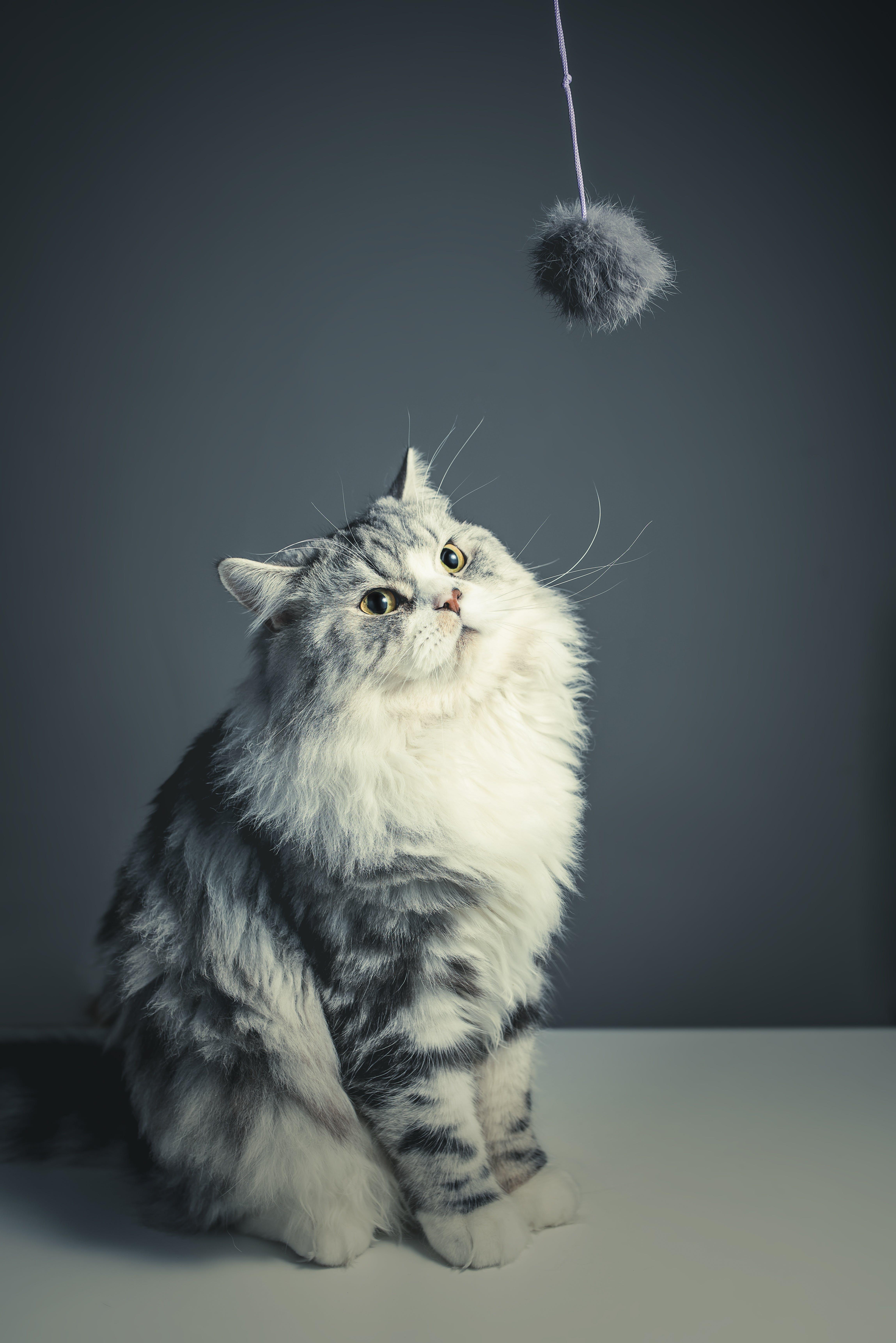 Persian Kitten Sitting on White Surface