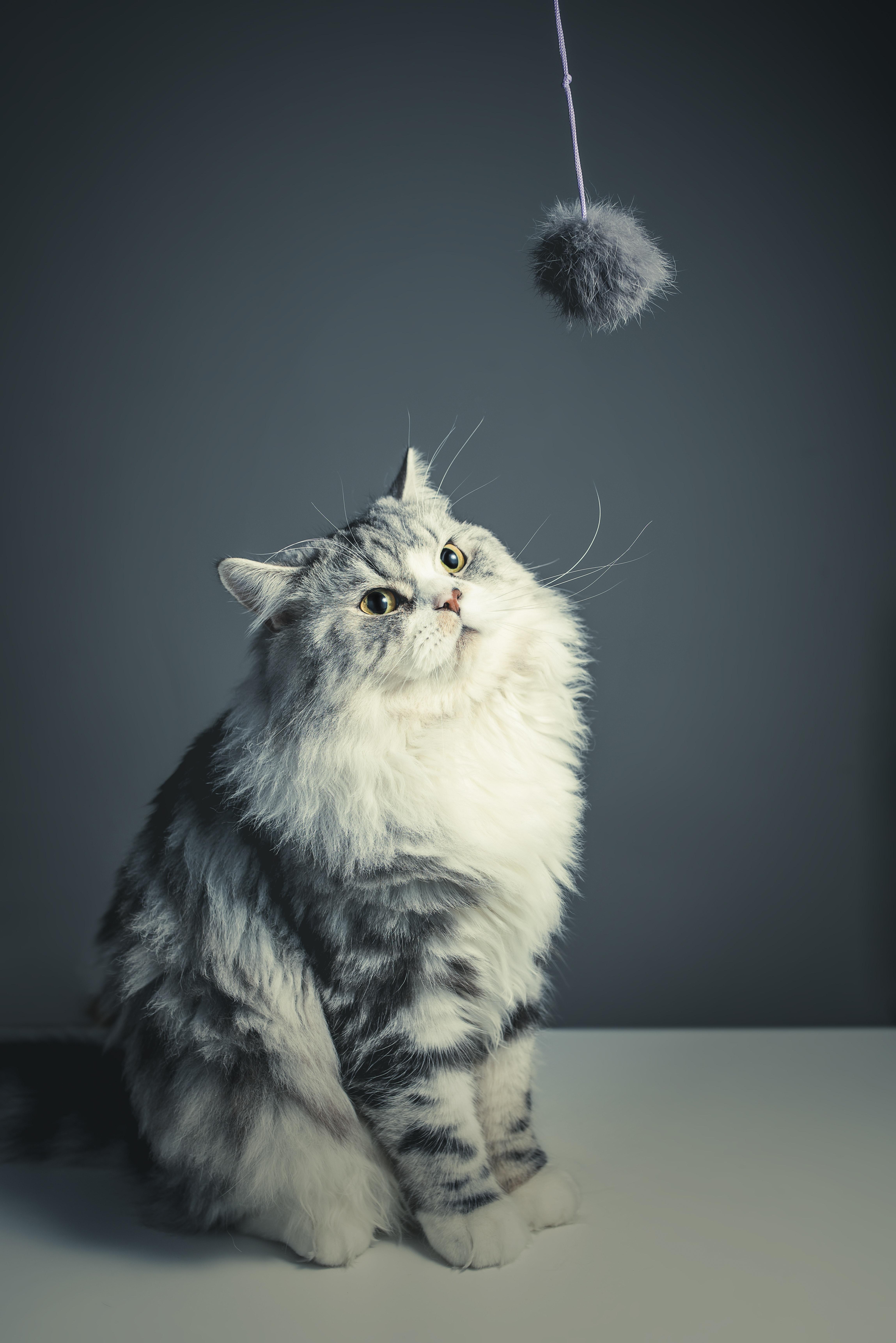Wallpaper Gambar Kucing Paling Comel Kucingcomel Com
