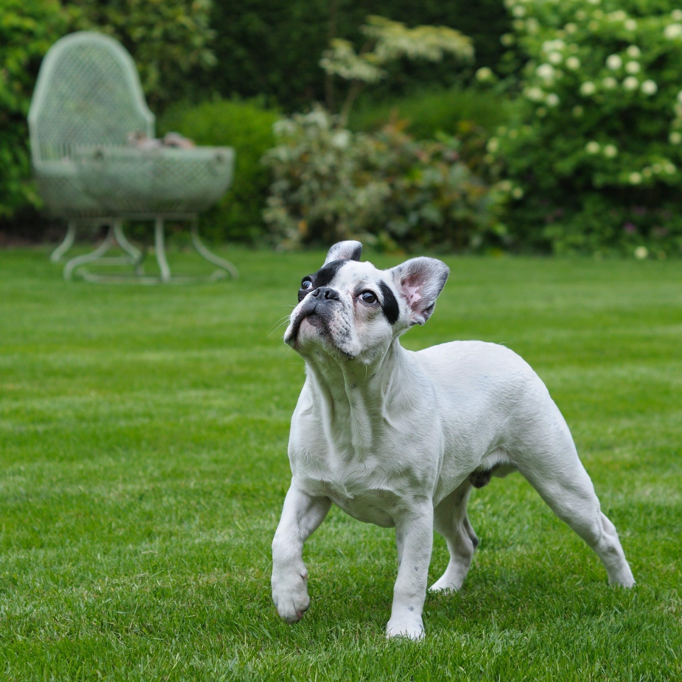 Free stock photo of animal, dog, grass, walk