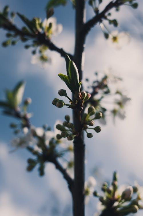 Darmowe zdjęcie z galerii z chmury, gałąź, kwiat, liście