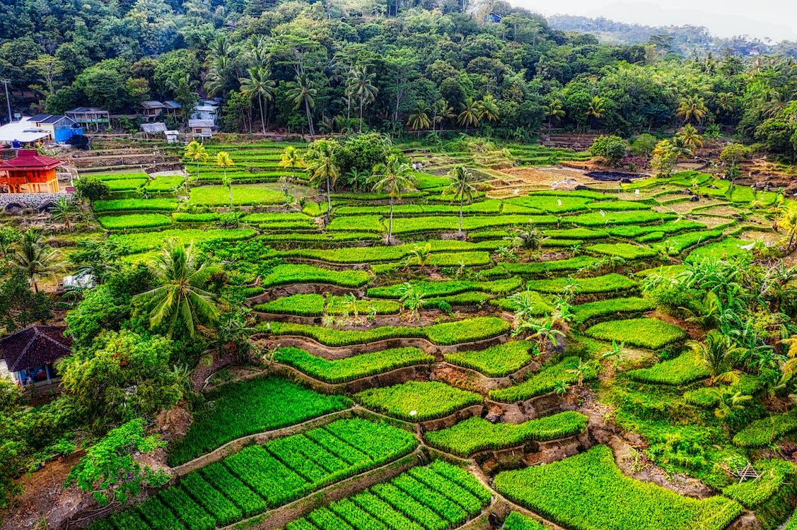 印尼, 印度尼西亞, 增長