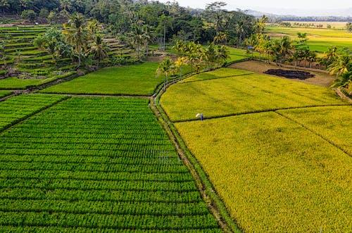 Základová fotografie zdarma na téma denní, dron, drone kamera, farma