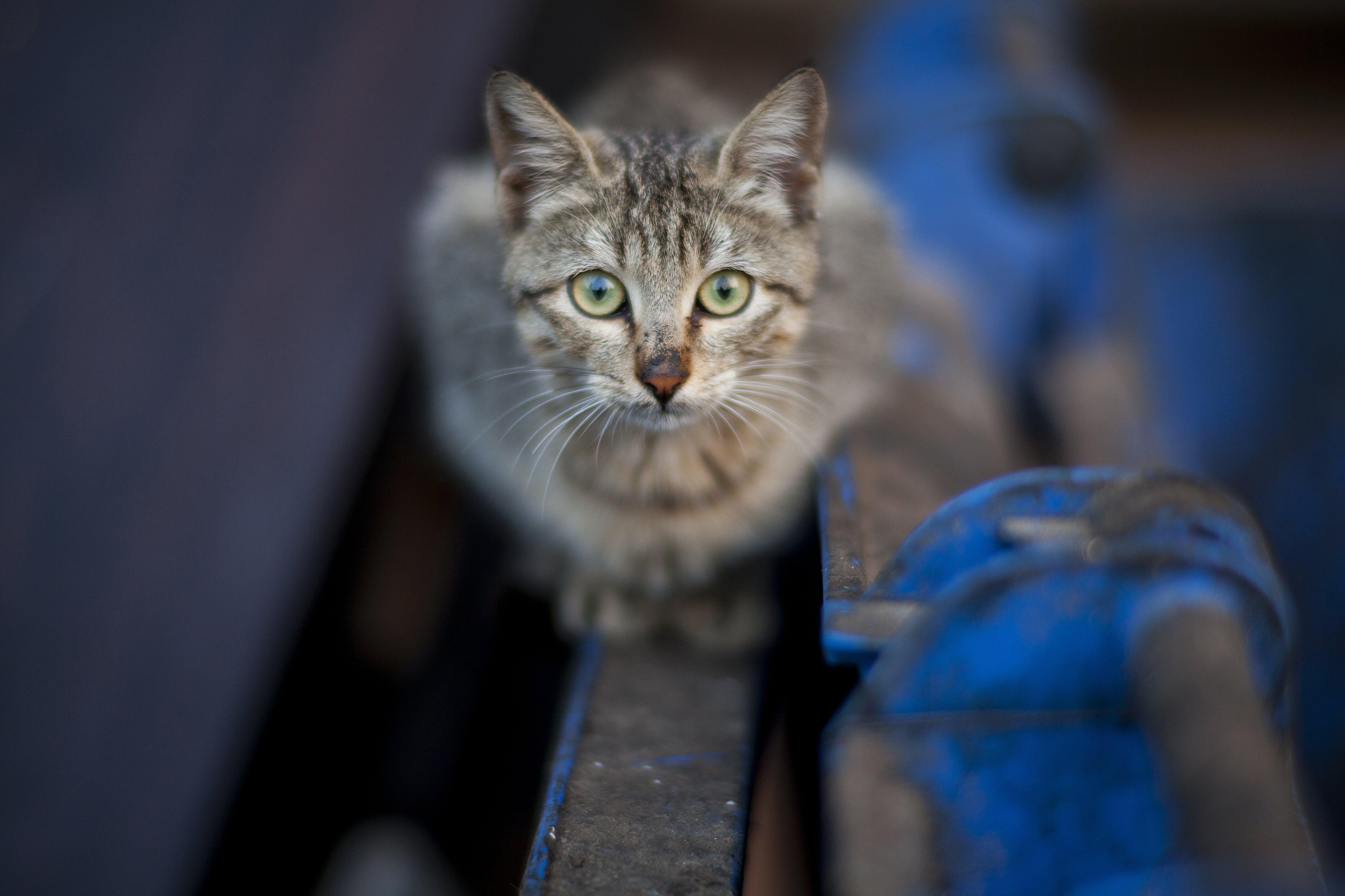 Free stock photo of street, pet, cute, eyes