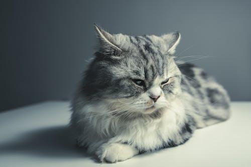 Základová fotografie zdarma na téma domácí mazlíček, kočka, kočkovití, kotě