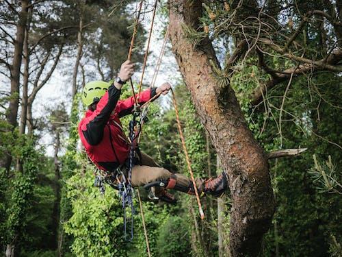 Photo Of Man Climbing On Tree