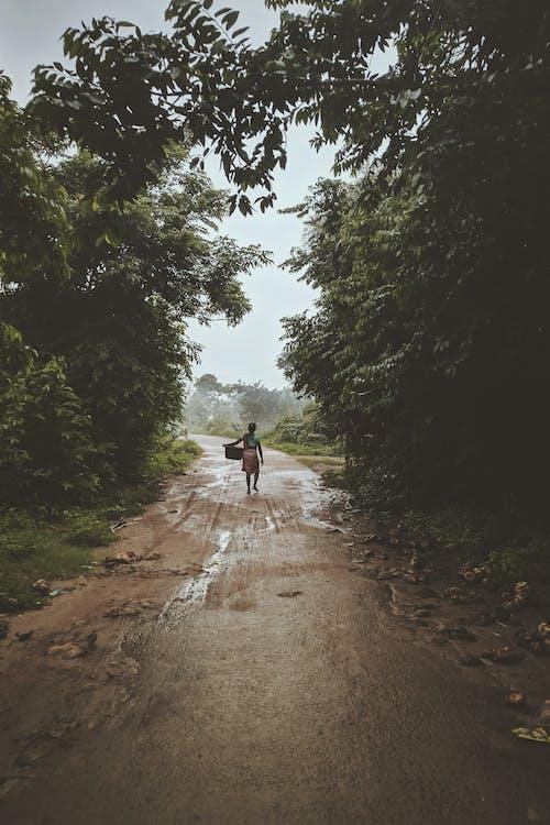 Persona Que Lleva Una Cesta Mientras Camina Cerca De árboles