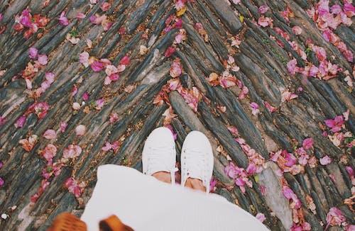 꽃, 나무, 디자인, 분홍색 꽃의 무료 스톡 사진