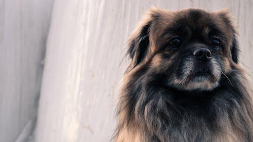 Gratis lagerfoto af dyr, hund, kæledyr, lille