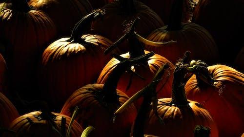 Close-Up Photo Of Pumpkins