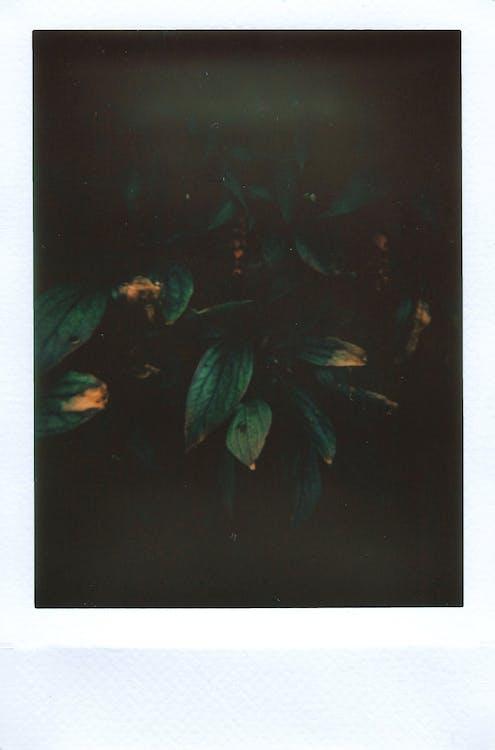 fosc, foto, fulles