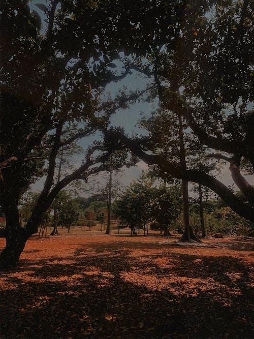 iPhone, 公園, 剪影, 喜怒無常 的 免費圖庫相片