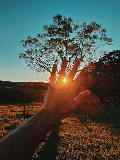 Gratis arkivbilde med åker, bakbelysning, daggry, gress