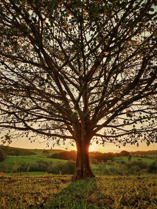 Ilmainen kuvapankkikuva tunnisteilla aamu, aamunkoitto, auringonvalo, aurinko
