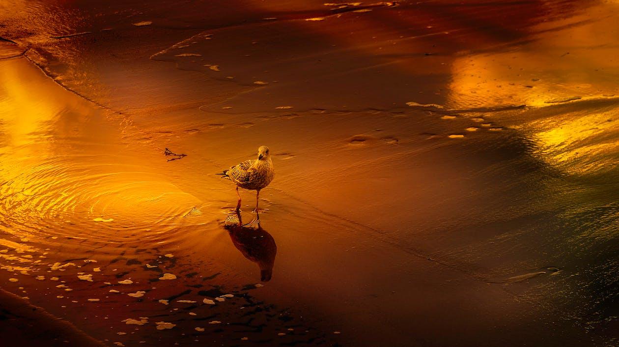 alkonyat, hajnal, madár