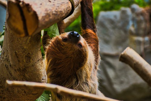 Selective-Focus Photo Of Sloth