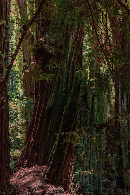 Fotobanka sbezplatnými fotkami na tému les, príroda, San Francisco, stromy