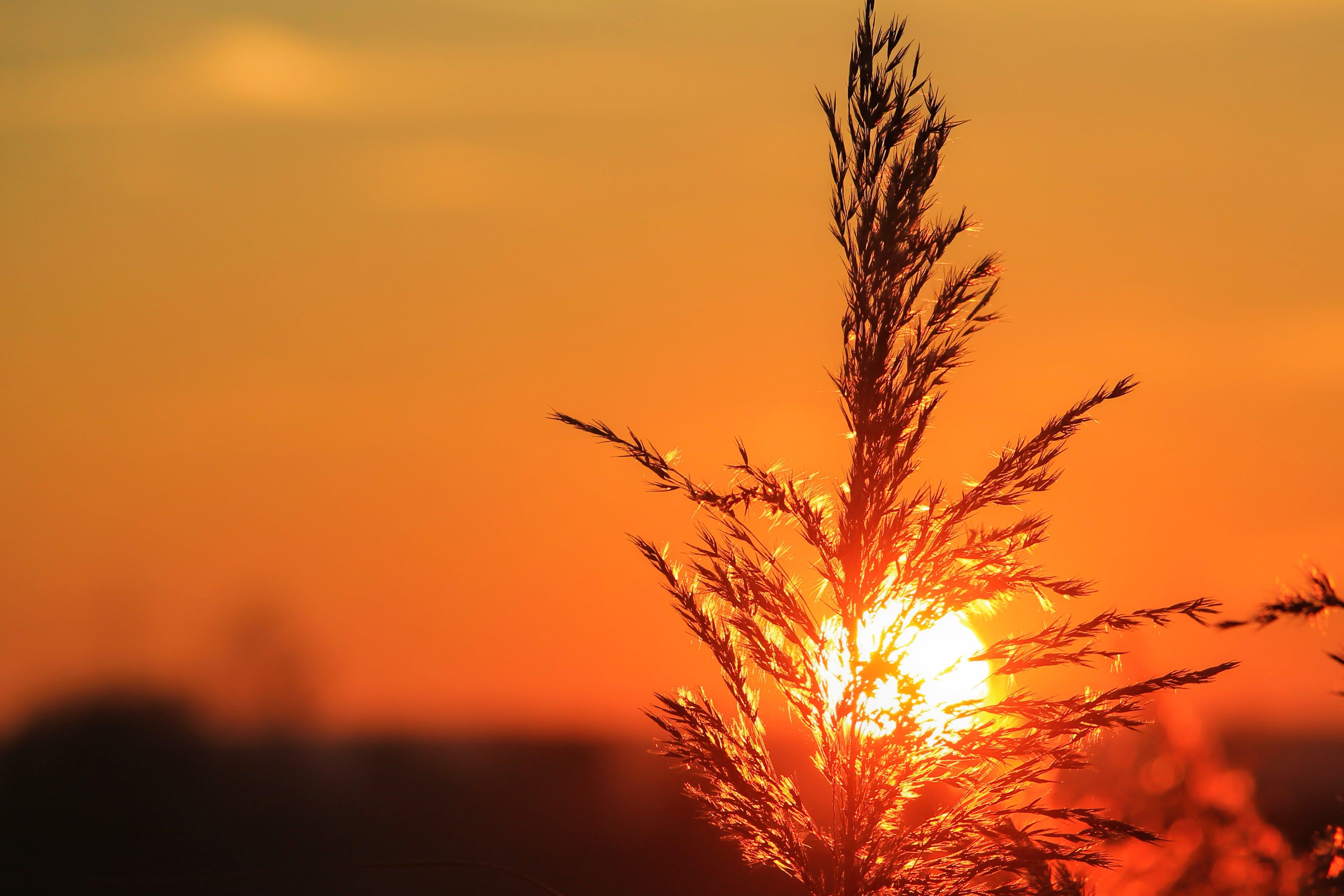 з підсвіткою, Захід сонця, небо