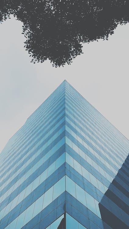 Ağaç dalları, bina, bina cephesi