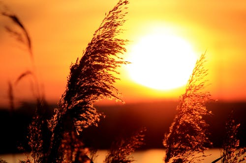 Low Angle Photography of Grass Near Sun