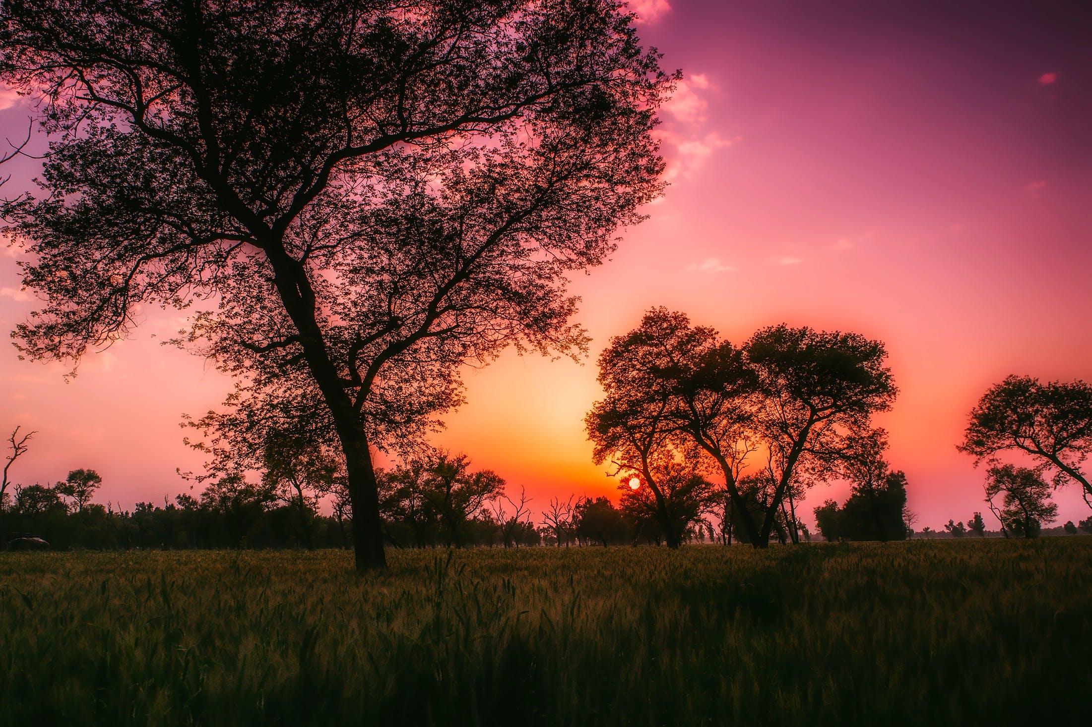 Ingyenes stockfotó fák, festői, fű, hajnal témában