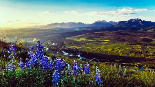 Free stock photo of dawn, dramatic, environment, epic