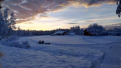 Безкоштовне стокове фото на тему «вечір, дерева, заморожений, застуда»