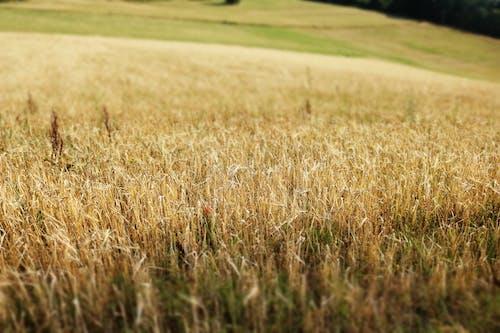 Základová fotografie zdarma na téma hřiště, pole