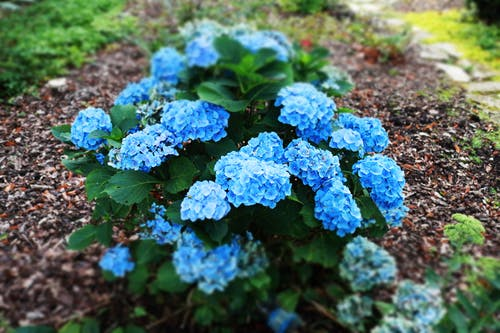 Безкоштовне стокове фото на тему «квіти»