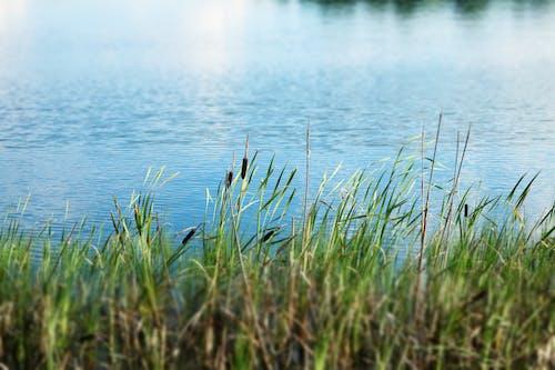 Безкоштовне стокове фото на тему «блакитна вода, трава»