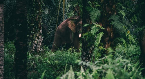 Free stock photo of asia, bull elephant, elephant, jungle