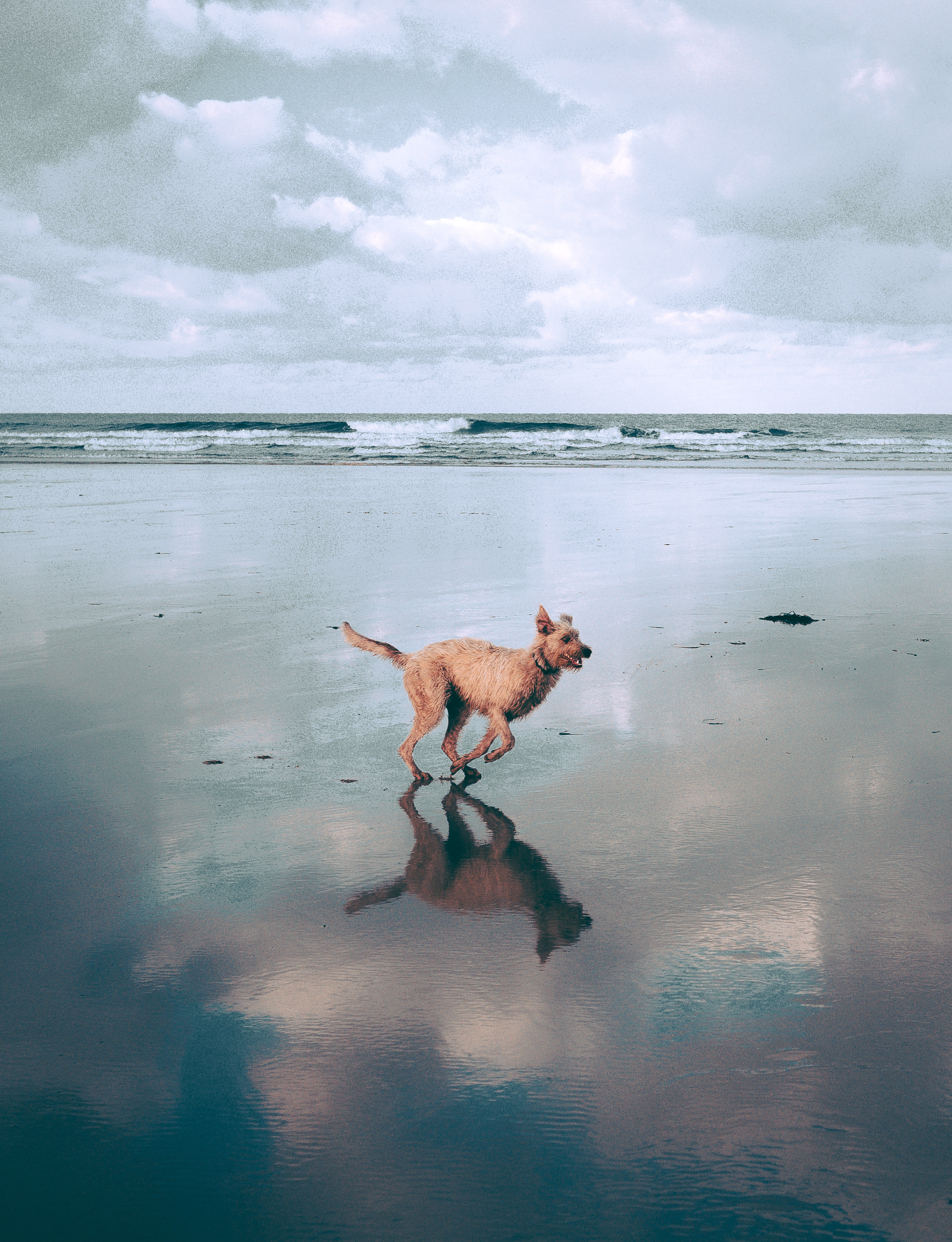 Dog Running At The Beach