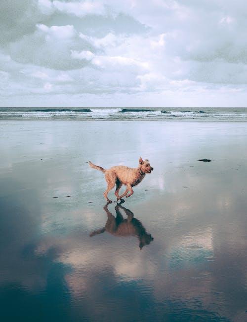 Ilmainen kuvapankkikuva tunnisteilla eläin, hauska, hiekka, hiekkaranta