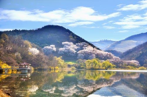 反射, 夏, 大韓民国, 山の無料の写真素材